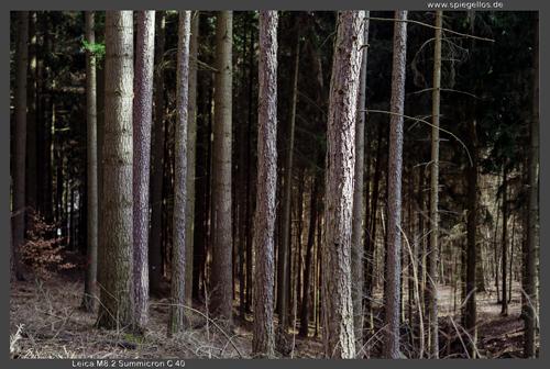 bäumebunt